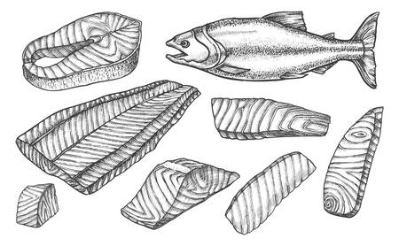 Salmon fish cut filet and steaks slices, vector sketch icons. Salmon fish cut parts for cooking recipe, preparation guide or product package design elements