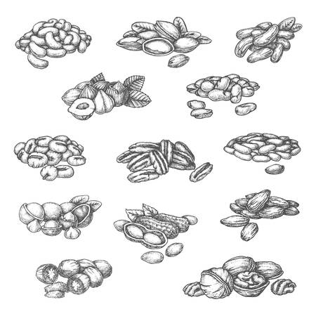 Nuts sketch isolated vector icons for food product package design. Hand drawn almond, hazelnut and pistachio, macadamia, pecan and Brazilian nut, peanut, soybean and pine seeds