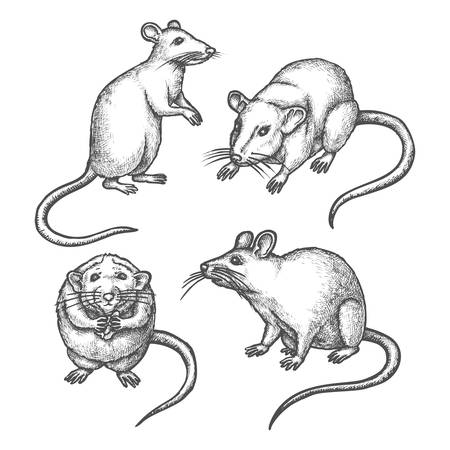Mouse sketch or hand drawn rat. Lab rodent sniffing or laboratory animal standing. Wild mice pest icon. Realistic rats with tail and pawn, fur. Nature and wildlife, biology vector illustration.