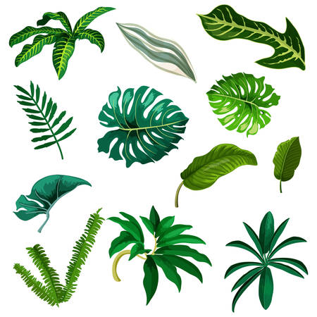 Set of tropic and exotic leaf. Watercolor tree branch of palm, coconut and banana. Green leaves elements of fern and monstera. Jungle plants foliage isolated. Twig and stem, summer or tropical flora