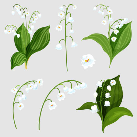 Set of isolated lily of the valley bouquet elements. Realistic convallaria majalis plant with white bells. Lily-of-the-valley flora for wedding or spring mother day. May decoration card. Green nature