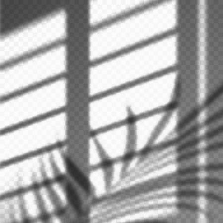 Blurred palm leaves and blinds shadow cast