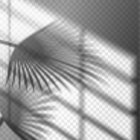 Blurry palm branch window reflection or shadow