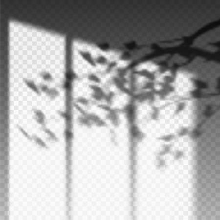 Plant branch or leaf shadow on transparent wall