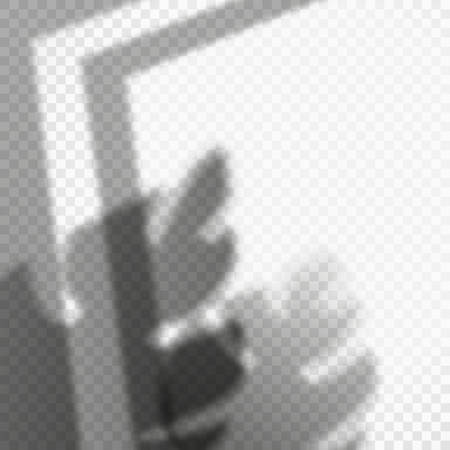 Shadow of opened window frame and monstera leaves.