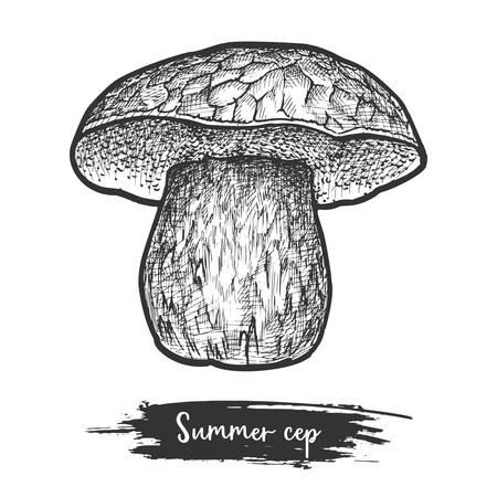 Sketch of summer cep boletus mushroom. Fungus