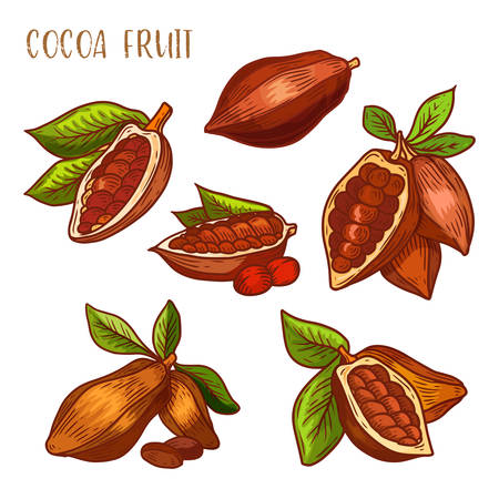 Cocoa beans, cacao pods, chocolate ingredients, vector isolated icons. Natural cocoa beans and cacao pods, whole and peeled with seeds, chocolate or sweet butter elements, sketch line