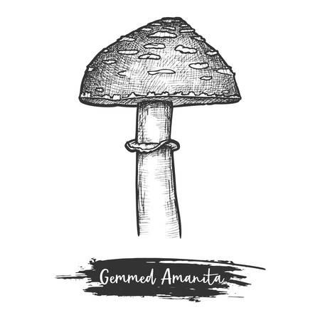 Cutted mushroom or shroom with cap sketch