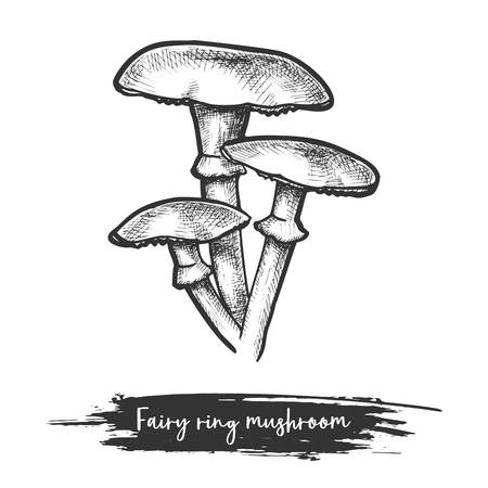 Sketch of forest or wood mushroom in fairy ring form. Marasmius edible shroom or eatable plant. Vintage sign or icon of fungi. Natural food. Culinary and botany, biology and nature, cook theme