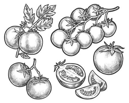 Set of tomato sketches on branch or stem. Sliced half of vegetable or fruit fetus. Hand drawn organic nutrition or food. Isolated sketching for juice or salad ingredient, vitamin and garden, harvest Vectores