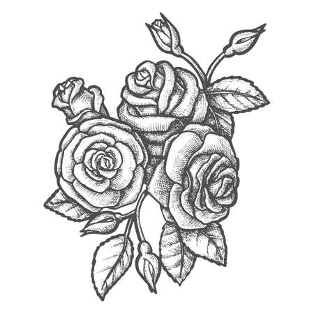 Bouquet of rose flowers sketch. Vintage poster with leaves and flowers, buds. Blossom of plant for wedding celebration. Beautiful flora for romantic gift. Valentine or mother day . Tattoo.Garden theme
