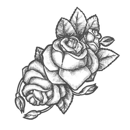 Sketch of rose flower for tattoo or romantic gift. Hand drawn plant for valentine or wedding day. Romantic flora. Blossom of plant with leaf and bud. Coloring symbol. Blossom and gardening theme Illustration
