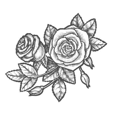 Hand drawn romantic flower or vintage rose vector illustration. Natural decoration for wedding or valentine day. Romantic plant for love and beauty drawing. Holiday gift and celebration. Tattoo