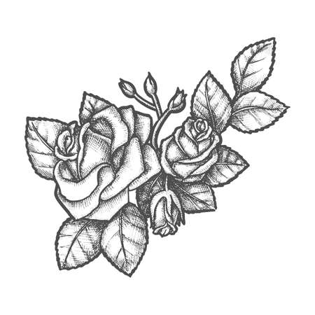 Sketch of rose bouquet with buds and flower, leaves. Branch of romantic plant engraved. Romantic or love tattoo. Vintage vector sign for valentine day gift. Coloring and sketching. Floral plant