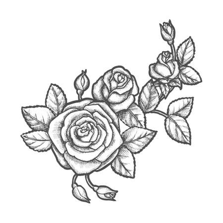 Tattoo with rose flower. Sketch of plant. Floral decoration or nature bloom. Romantic sign for valentine or mother day gift. Flora and love, nature element. Vintage vector illustration for botany book Illustration