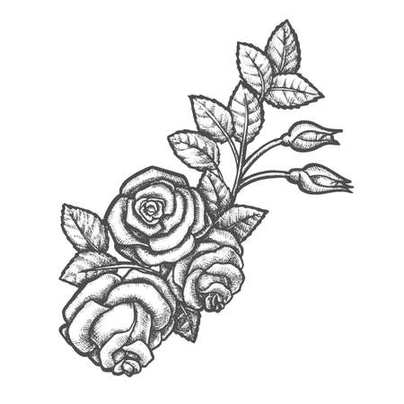 Branch with rose flower and buds, leaves. Sketch of romantic plant blossom. Garden flora for mother or valentine day celebration. Natural floral decoration. Sketching of tattoo. Realistic coloring