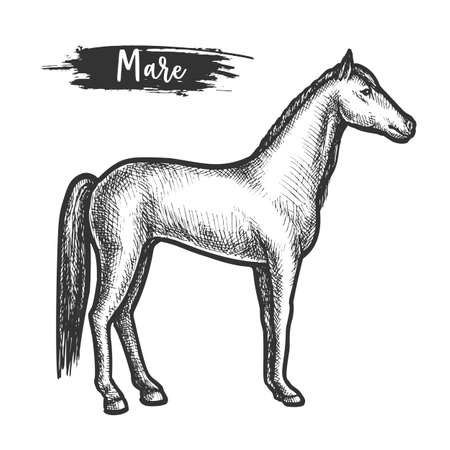 Vintage horse sketch or mare with mane