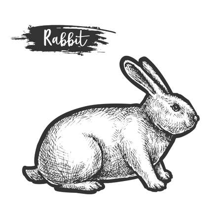 Hand drawn rabbit or bunny sketch, hare Illustration