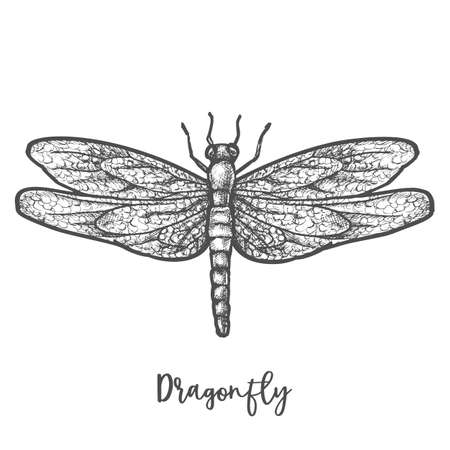 Engraved dragonfly or flying insect sketch vector