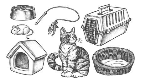 Set of isolated sketch of cat items. Kitten food bowl and mouse toy, home or house, cathouse and tray, toilet and box, feather toy and container. Domestic animal accessory or pet supplies. Sketching Illustration