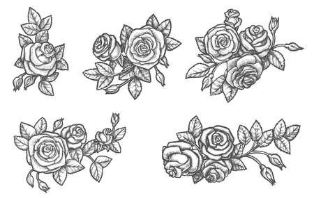 Set of isolated rose flower sketch. Plant drawing Ilustração