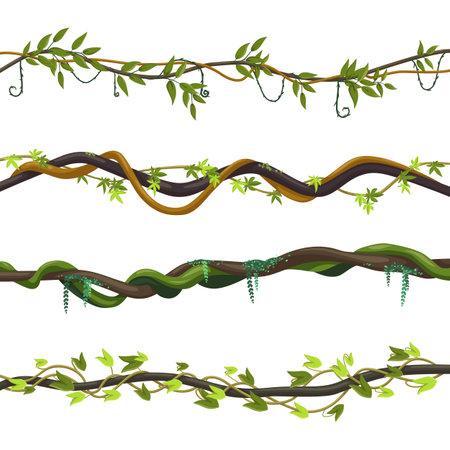 Set of isolated jungle vines, twisted liana plant