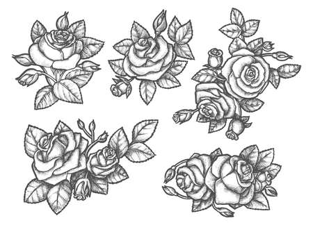 Sketches of rose bouquet or hand drawn flowers