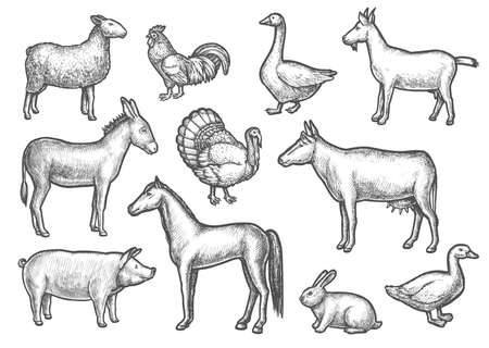 Set of isolated domestic bird and animal sketch