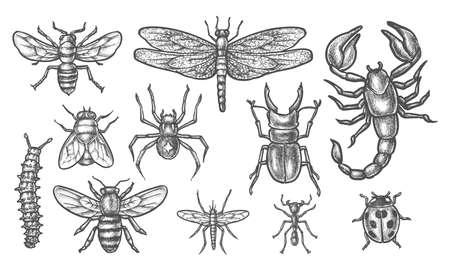Set of insect sketch. Vintage drawing of bugs Ilustração