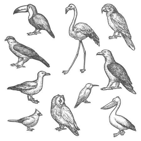 Set of isolated bird wildlife sketches. Animal