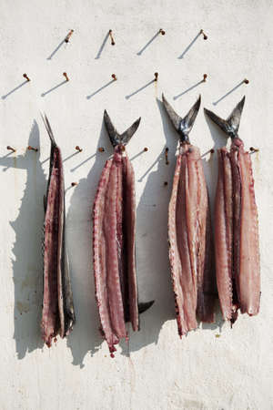barracuda: Four gutted fish hanging from nails in a wall  Stock Photo