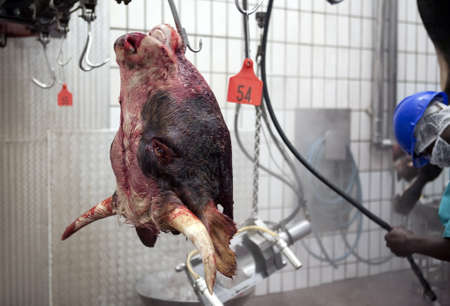 slaughter: Slaughter House