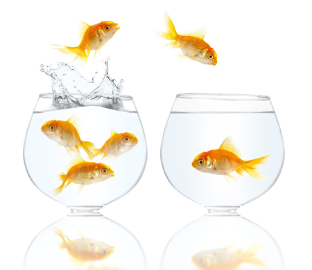 Aquarium with gold small fishes on a white background photo