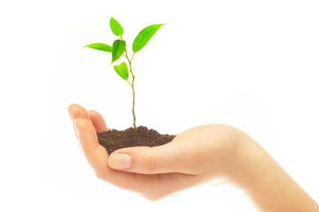 Human hands hold and preserve a young plant Stock Photo - 1413579