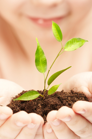 The boy observes cultivation of a young plant. Stock Photo - 1413535