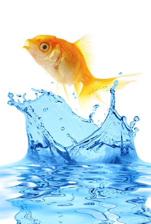 The gold small fish jumps out of water photo
