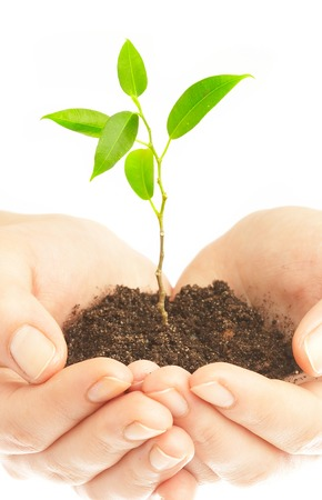 Human hands hold and preserve a young plant Stock Photo