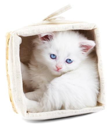 White kitten in a basket...Studio shot. photo