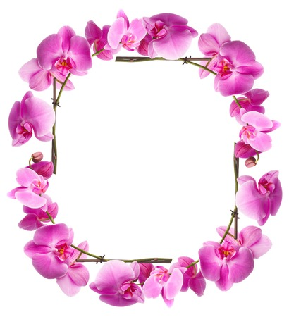 top animated: Framework from pink flowers on a white background Stock Photo