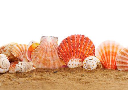 cockleshells: Sea cockleshells on peep. Stock Photo