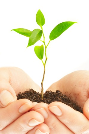 Human hands hold and preserve a young plant Stock Photo - 1497939