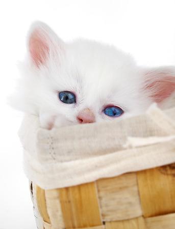 meow: White kitten in a basket... Stock Photo