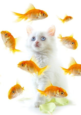 White a kitten and a gold small fish. photo
