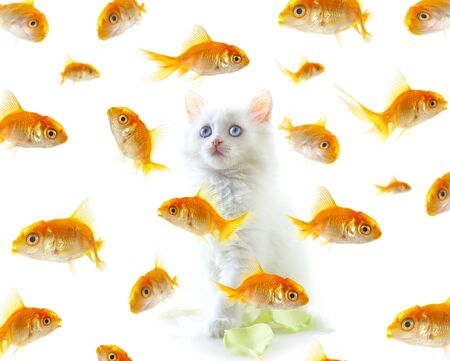 White a kitten and a gold small fish. Stock Photo - 1552209