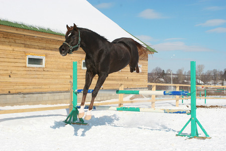 steed: Jumping horse Stock Photo