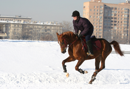 The girl the equestrian skips on a horse... photo