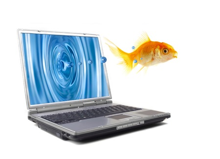 The gold small fish jumps out of the monitor of a computer Stock Photo - 1592167