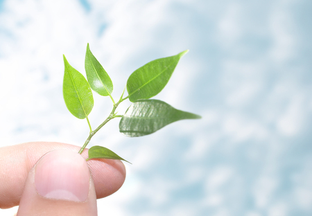 Human hands hold and preserve a young plant - -- CONTEST Stock Photo - 1612809