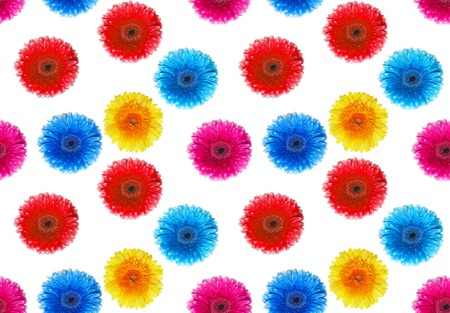 top animated: flowers gerbers on a white background. A seamless background.
