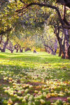 Garden and apples photo